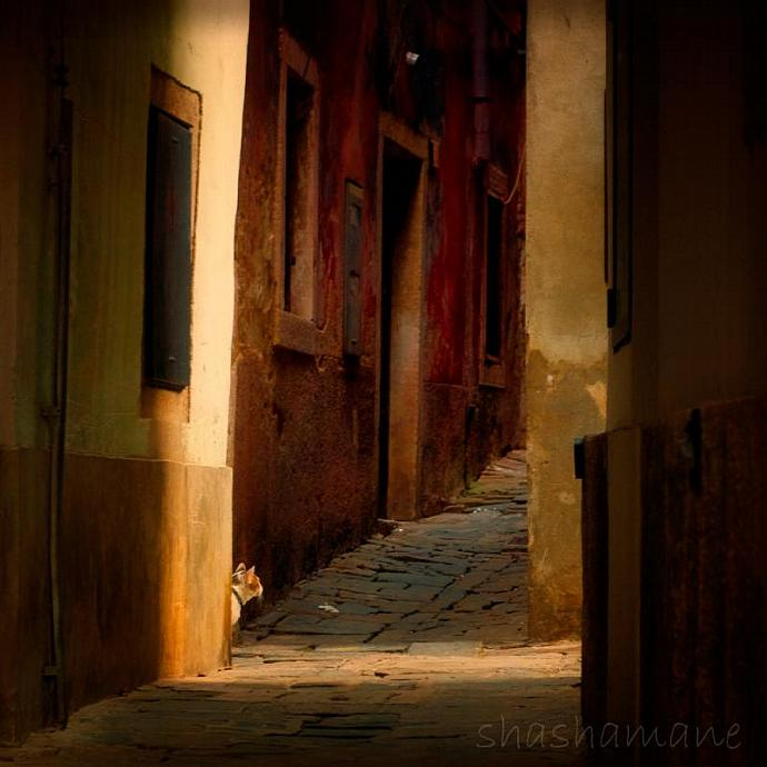 "The Alley Cat Patrol - 8x8"" fine art photography print"