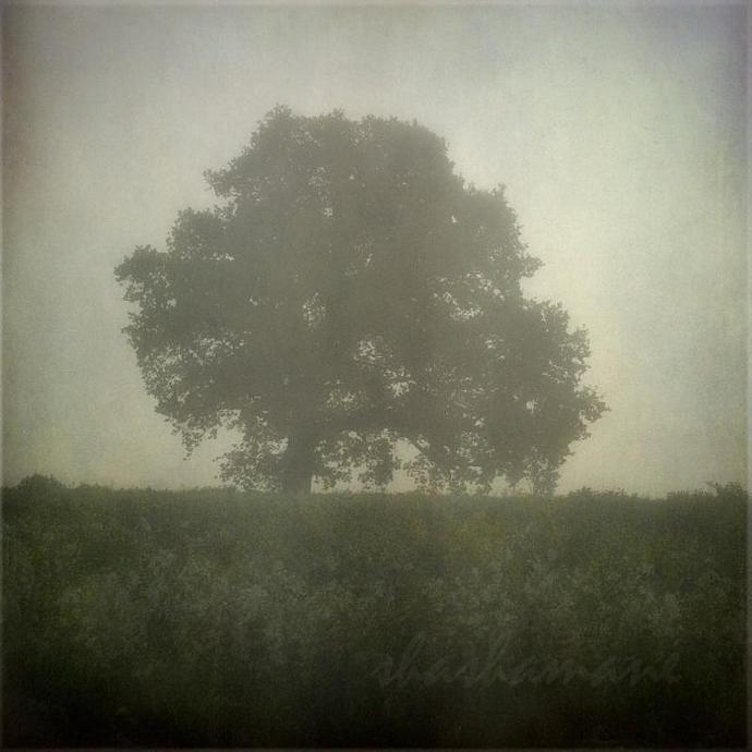 "Am I awake - Misty, ethereal dawn 8 x 8"" fine art photography print"