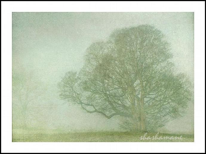 "Embraced by snow and mist - Fog and snow trees scene 5 x 7"" fine art photography"