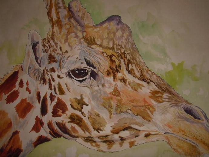 Savanna Giraffe