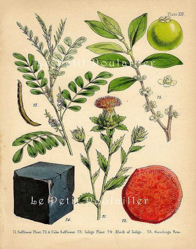 Natural Plant Dyes 1853 Victorian Thomas Croxen Archer Hand-Colored Antique