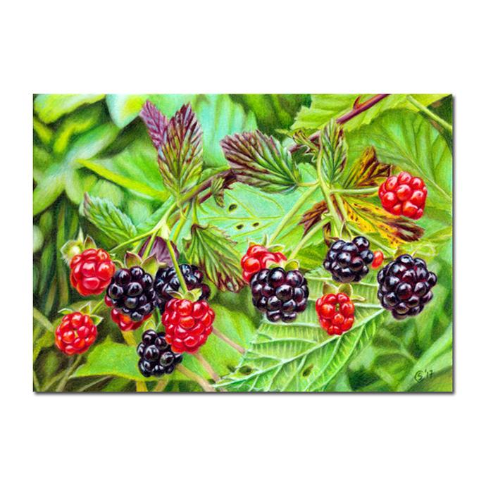 BLACKBERRIES summer fruits berries colored pencils painting Sandrine Curtiss Art