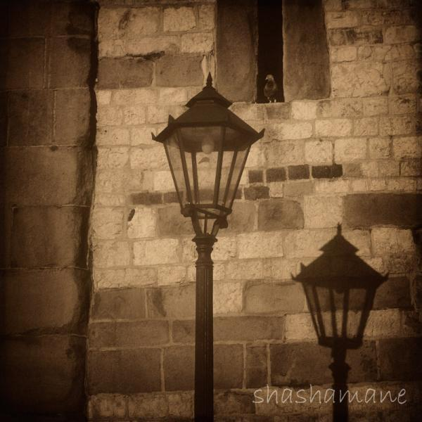 shadow of a light memory 5x5 photography print