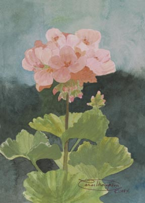 """Blush Of Summer"" Giclee Paper Print by Carol Thompson"