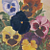 """Peek-A-Boo Pansies"" Giclee Paper Print by Carol Thompson"