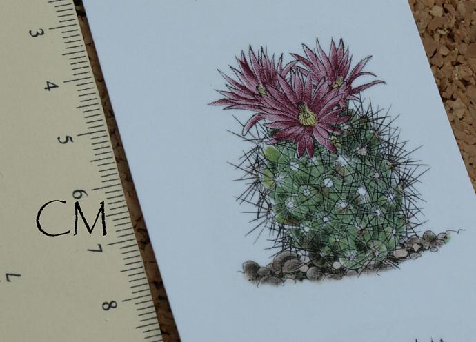 Cactus Ceramic Waterslide Decal D10-34