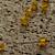 Yellow Chinese Crystal Bicone Beads