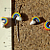 Rainbow Ceramic Beads