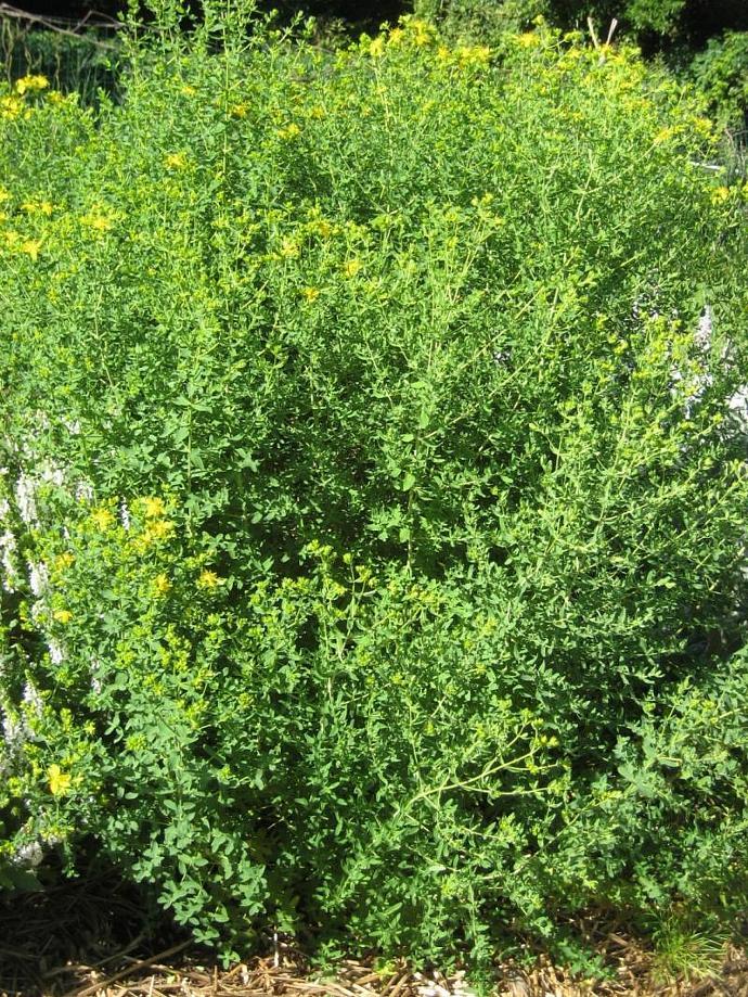 Moisturizing Facial Cream, Herb n' Floral Healing Moisturizer