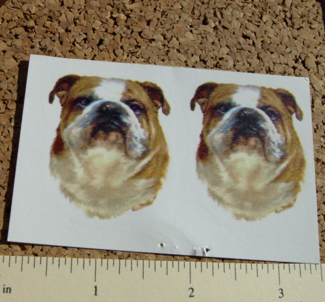 Bulldog Ceramic Waterslide Decals (D9-39)