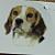 Beagle Dog Ceramic Waterslide Decals
