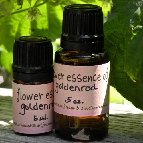 Flower Essence of Goldenrod - .5 ounce, Handmade