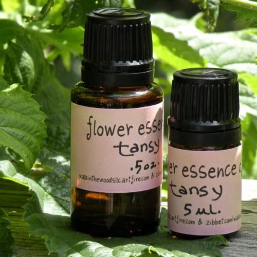 Handmade Flower Essence of Tansy - .5 ounce