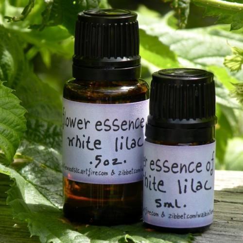 Handmade White Lilac Flower Essence - 5 ml