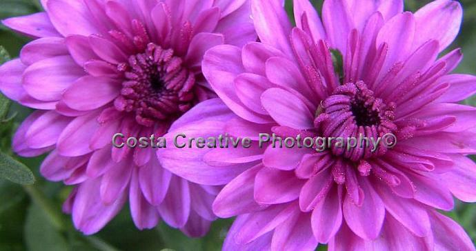 Purple Flowers 8x10 Fine Art Print