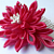 Hot and Spicy Pink Chrysanthemum -- Fabric Flower