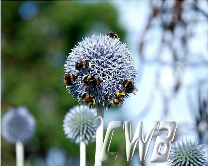 Bees in the Garden fine art print