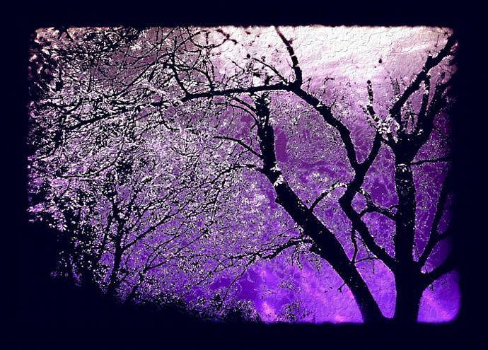 Twilight forest - Halloween card