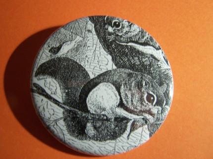 Squirrels Button / Antique Etching