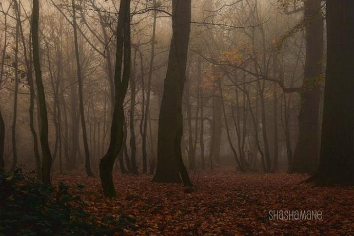 Misty forest 8x12 fine art photo print. Foggy, fall, autumn, winter woodland