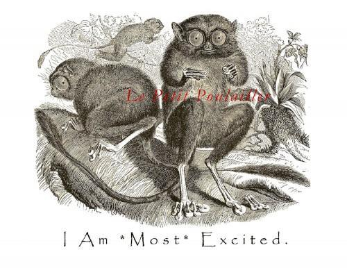 Victorian Very Excited Tarsier Stationery Note Flat Set