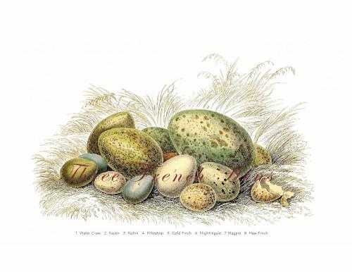 Victorian Natural History Bird Eggs Stationery Note Flat Set