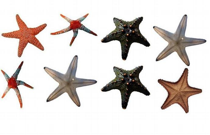 """9 Starfish Decals - Each decal is approximately 6"""" tall x 6"""" wide"""