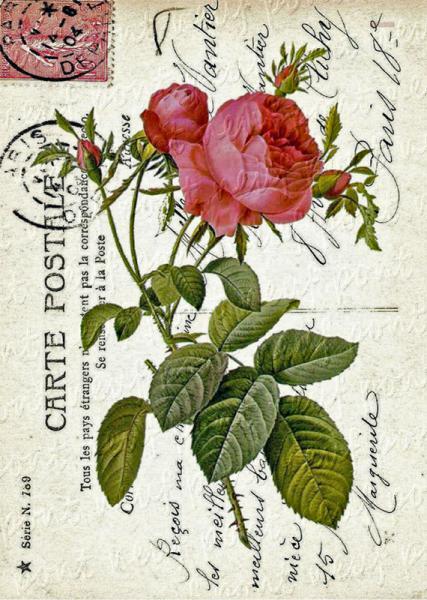 Floral Impressions No 17 Roses Carte Postale Digital Collage Sheet Download and