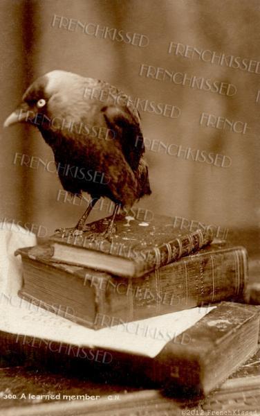 Smart Bird CROW on stack of Vintage Books Antique postcard Sepia DIGITAL scan