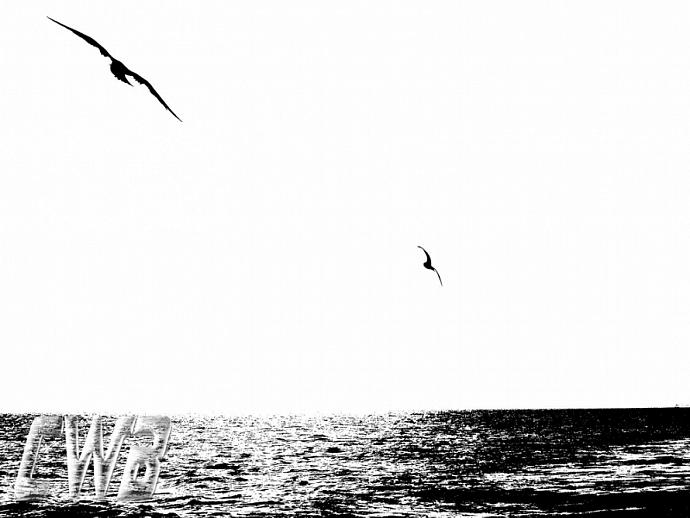 Gulls on the Beach Gulf Coast art print