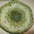 Crocheted microfiber coaster set green mix