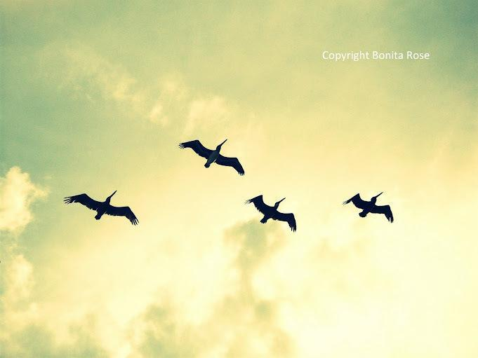 Ocean Photography - Pelicans In Flight  8x10