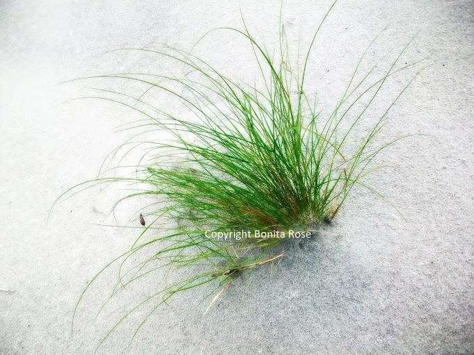 Ocean Photography - Sea Grass  8x10