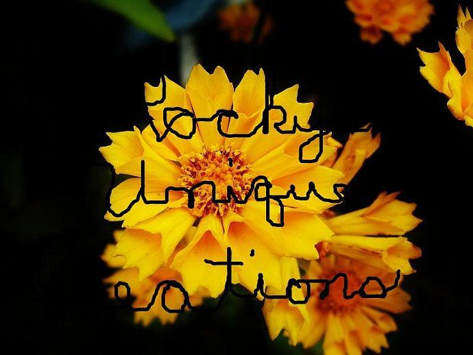 Original From My Garden Counted Cross Stitch Yellow Tickseed Flower PATTERN