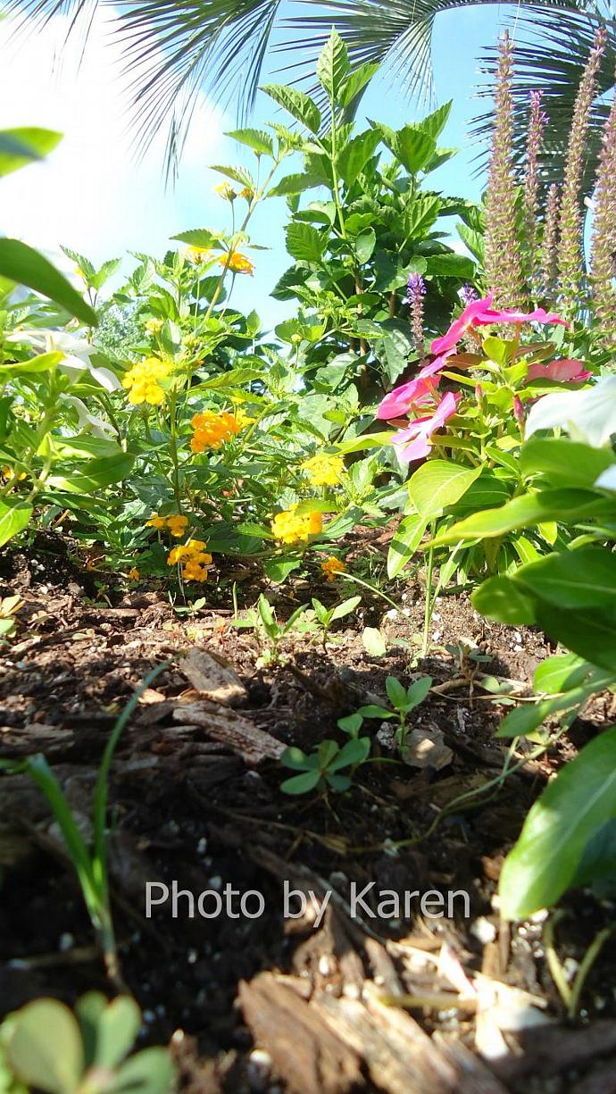 Nature's Beauty, Flowers Original Photograph, other sizes available