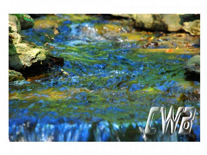 WaterColors Peacock fine art print