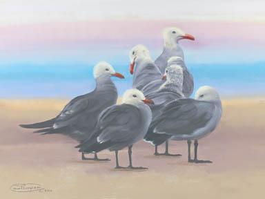 """Heermann's On The Sand"" Giclee Paper Print by Carol Thompson"