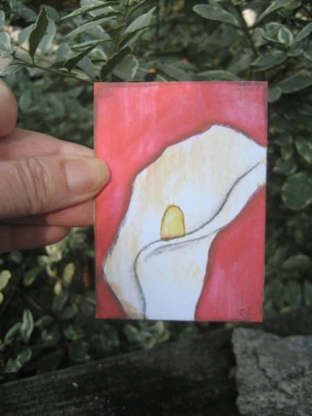 Calla Lily aceo PRINT artist trading miniature art LIMITED edition