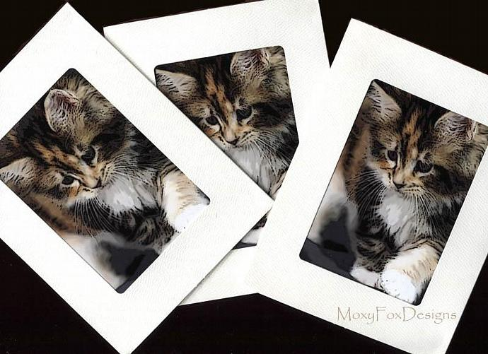 Cards – CALICO KITTEN – 3 Photo Cards -- FREE US Shipping