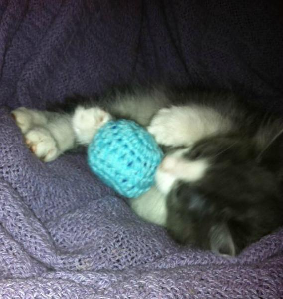 Cat Toy Grab Bag- 5 toys