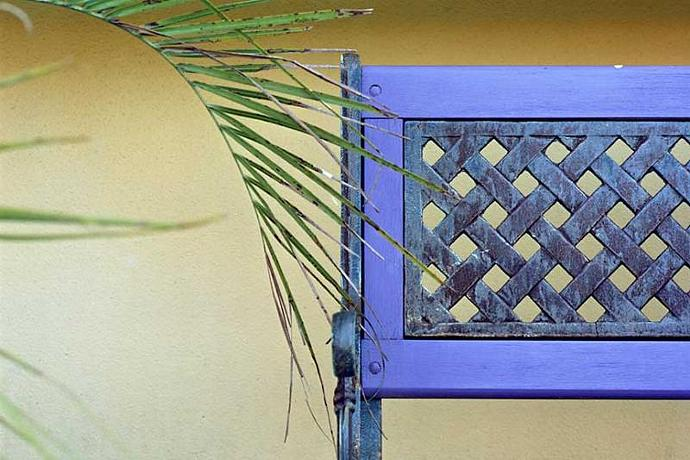 Still Life of Purple Seat and Green Fronds Fine Art Photo Great home Decor