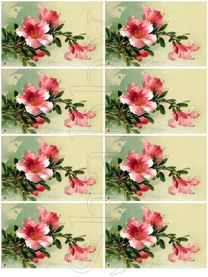 Shabby Chic digital collage sheet for scrapbook and cards  DC506