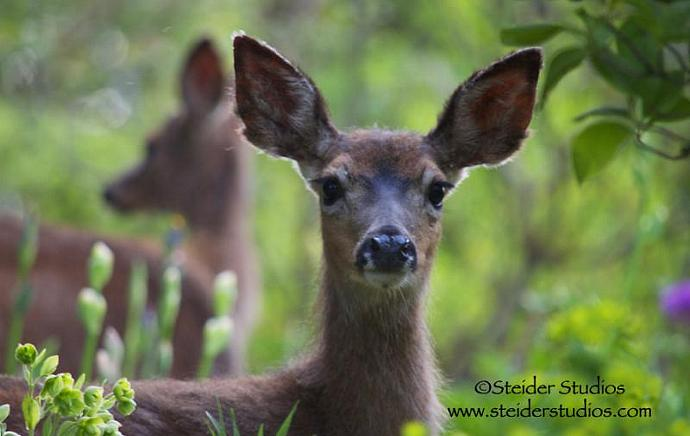 Close Up Twin Fawns in my Garden, Nature Photography Blank Greeting Card