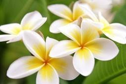 PINEAPPLE JASMINE--All Natural VEGAN Deodorant,Loads of Skin Lovin Oils and
