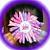 Pink Lavender PRINCESS Bottle Cap Korker Hair Bow FREE SHIPPING