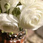 Featured item detail 4966369 original