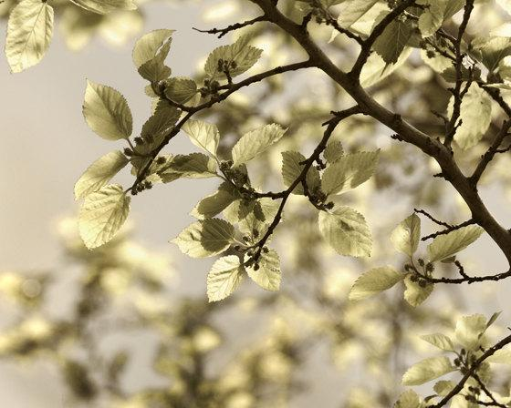 tree photo, gold leaves photography, nature photography, tree photography,