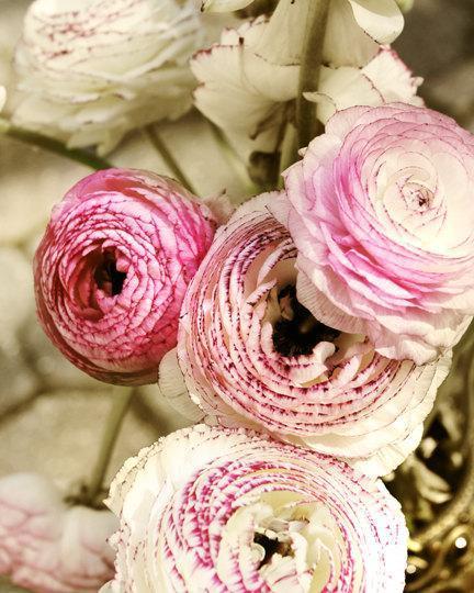 Pretty Floral Still Life photography, ranunculus photo, magenta wall decor, pink