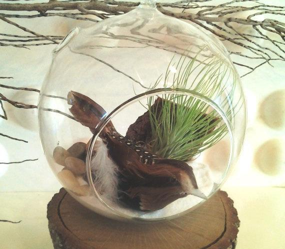SOLITUDE  Air plant terrarium - Air plants - Terrariums