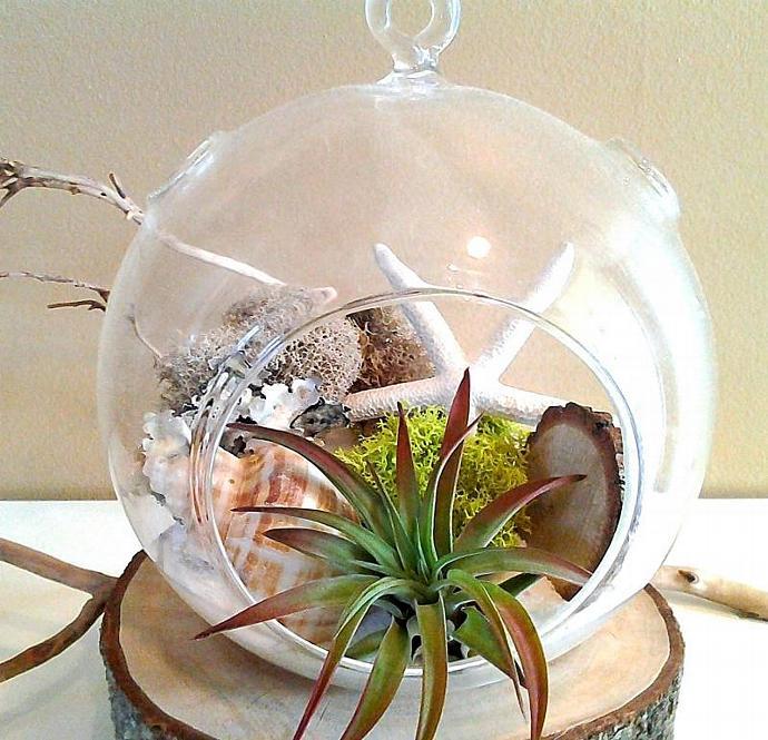STARFISH - Large Round Glass Globe Terrarium with Air plant, Moss, Lichen,
